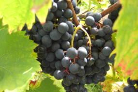 Weinbilder 028