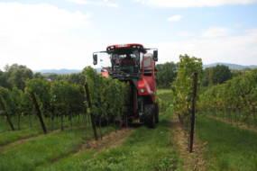 Weinbilder 030