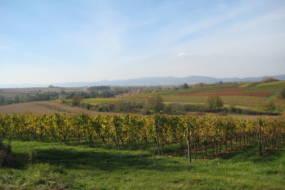 Weinbilder 060
